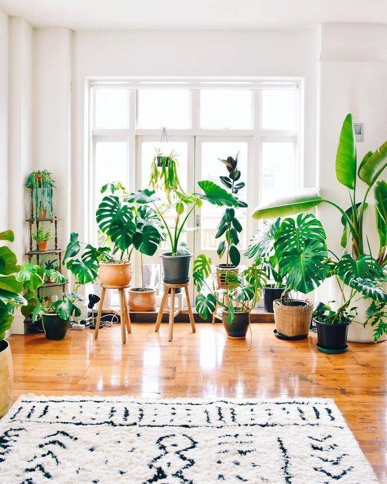 Menyulap dekorasi rumah lama dengan tanaman hias